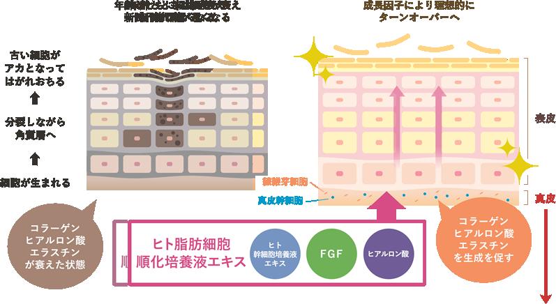 培養 液 と は 幹細胞 ヒト